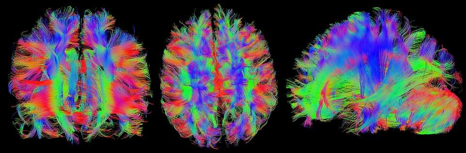 Neurociência ajuda até na hora de avaliar os estudantes